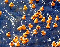 Rubber Duck Race.